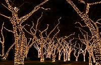 Tree Lights